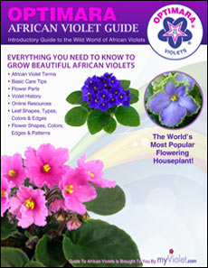 Optimara Guide to African Violets